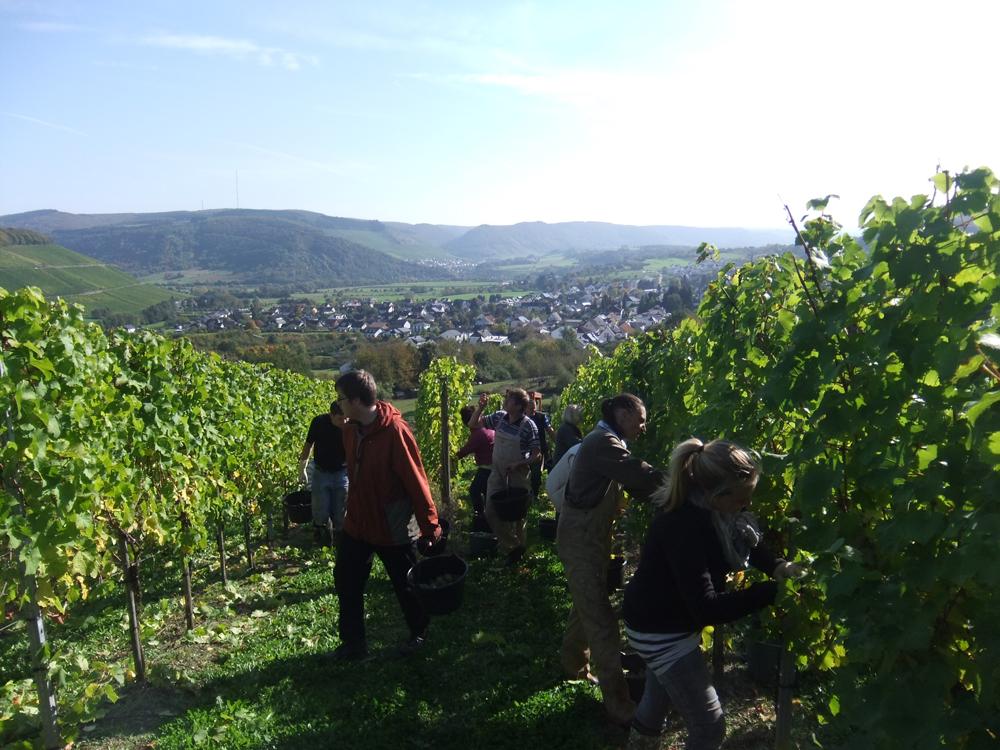 Weingut Eilenz, Ayl