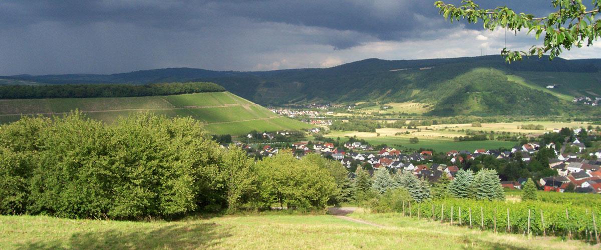 slider-weingut-eilenz-aylerkupp-04